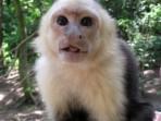 Tavus Kuşundan Korkan Maymun