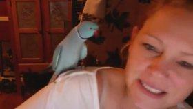 Alt Dudak Hastası Papağan