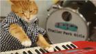 Piyano çalan çılgın kedi