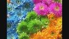 Mustafa Kaya - Bitkleri Tanıtma