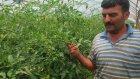 Domates Serası - Antalya Kumluca - Hüseyin Nacakcı