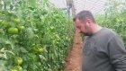 Domates Serası - Antalya Kumluca Sarıcasu- Emre Tüfekci