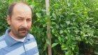 Biber Serası Antalya Kumluca