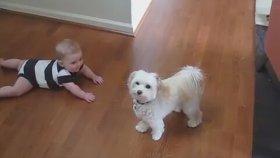 Köpeğin Dansına Gülen Sevimli Bebek