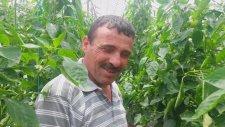 Biber Serası - Kumluca Hacı Veliler - Süleyman Şah