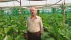 Patlıcan Serası - Antalya Finike Hasyurt - Fahrettin  Başkaya
