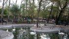 Kuğulu Park Ve Konukları (hd)