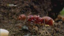 National Geographic Böcek Savaşları