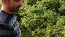Gül Ağacı Bahçesi - Isparta -  Ali Ünlü