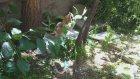 Bahçede Oyun Keyfi