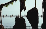 L'amour des moules Fragman