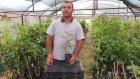 Aksu Pembesi Ahududu Frambuaz Özellikleri ve Meyve Fidanı Satışı
