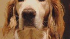Doğancan - Zamanla Sahipleri De Köpeklerine Benzer