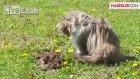 Kedi Köstebekten Korktu