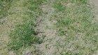 Yiğidolar Kangal Çifliği