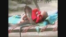 Yastıksız Yatan Kobrasız Yatmayan Bebek