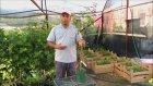 Limon Ayvası Özellikleri Ve Aşılı Sertifikalı Ayva Fidanı Satışı