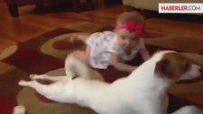 Köpek Yedi Aylık Bebeğe Emeklemeyi Öğretti