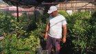 Turfanda Erkenci Anna Elma Meyve Özellikleri ve Yarı Bodur Elma Fidanı Satışı
