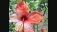 Sydney Bechet - Petit Fleur - Klarinet