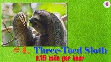 Dünyanın En Yavaş 10 Hayvanı