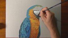 Gerçek bir papağan nasıl çizilir