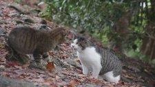 Anlaşamayınca Kavga Eden Kediler