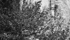 Pisagor - Rögar Kelebeği (Düet Zagros Ft Zilan)
