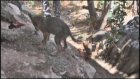 Yavru Kurtlar Yabanileştirilip Doğaya Salınacak - Burdur