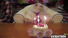 Dünyanın En Komik Kedi Videoları