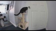 Kedi ve Köpekten Büyük Kaçış!