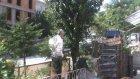 Bal Arıları Kent Merkezindeki Ağaca Oğul Verdi - Bilecik