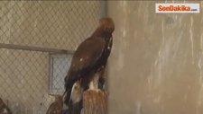 Yaralı Kuşlar, Doğaya Bırakılmayı Bekliyor