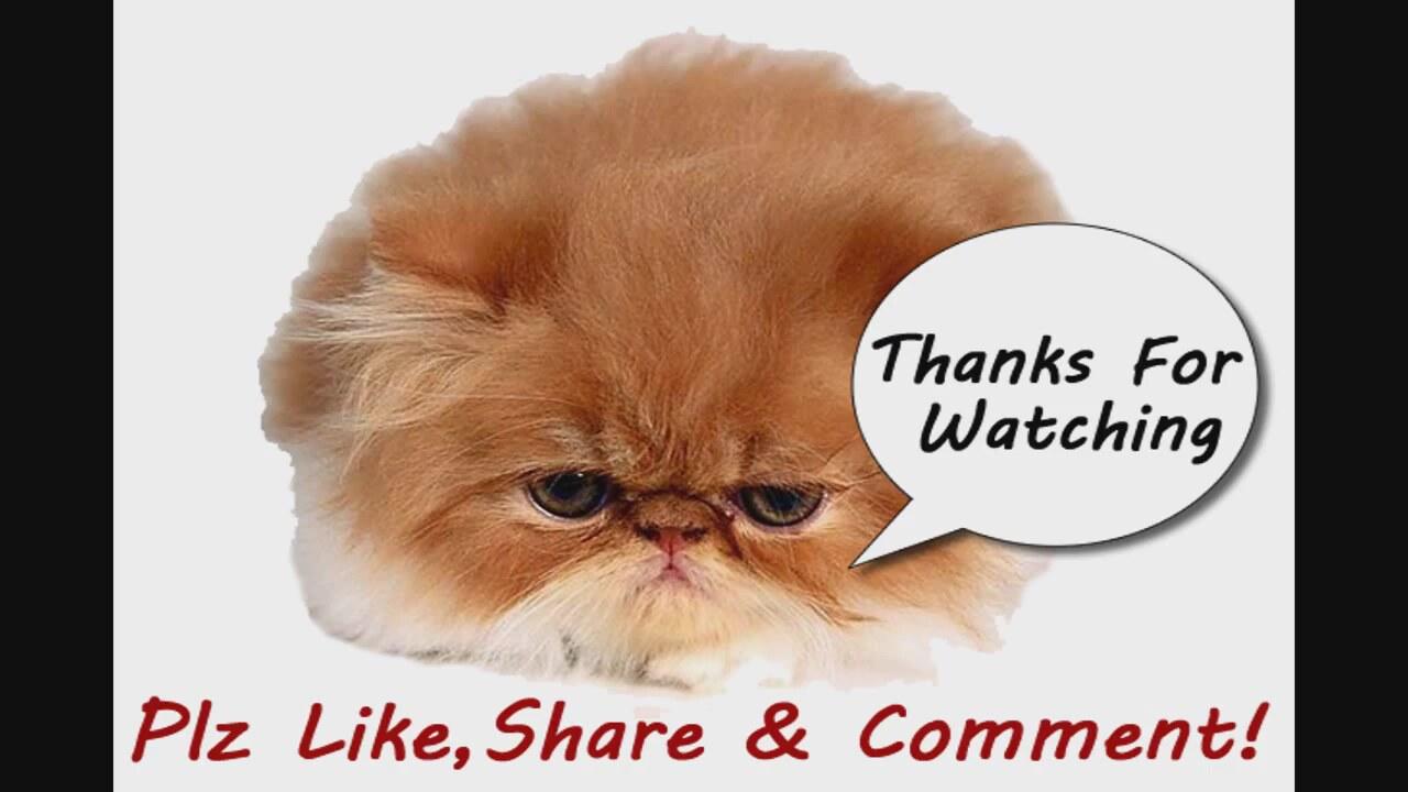 En Komik Kedi Videoları Izlesenecom