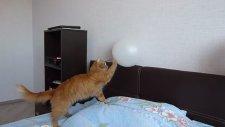 Balona Pati Atan Garfield'ın Dramı