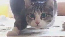 Dansçı Kedi