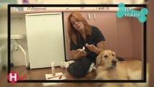 Dostlarımız - Köpek Bakımı - Köpeklerde Diş Fırçalama