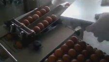 Yumurtanın Akı ile Sarısını Ayıran Makine
