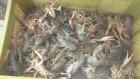 Eğirdir Gölü'nde kerevit avcılığı başladı - ISPARTA