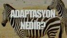 Adaptasyon Nedir? Tek Cümlede Evrim