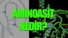 Aminoasit Nedir? Tek Cümlede Evrim