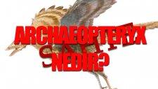Archaeopteryx Nedir? Tek Cümlede Evrim