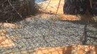 Türkiye'nin lavantası bu köyden çıkıyor - ISPARTA