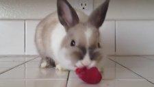 Kırmızı Rujlu Tavşan