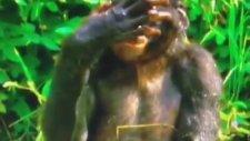 Maymunun Abdest Mevzusu