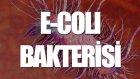 E - Coli Bakterisi Nedir? - Tek Cümlede Evrim