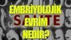 Embriyolojik Evrim Nedir? - Tek Cümlede Evrim