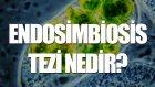Endosimbiosis Tezi Nedir? - Tek Cümlede Evrim