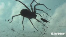 Dünyanın En Büyük 10 Örümcek Türü