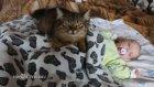 Ek iş olarak masörlük yapan kedi